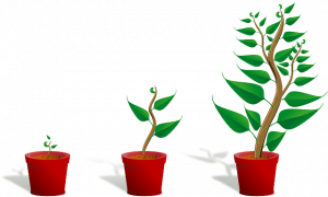 three potted plants from sprout to full sized