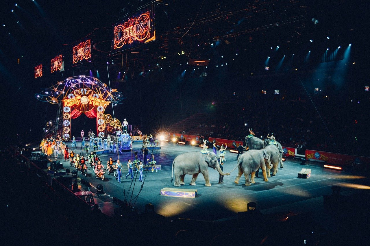 circus procession in arena with elephants and performers